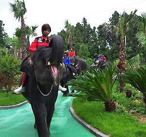 코끼리트래킹(점보빌리지) 상세보기