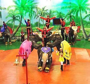 코끼리쇼+바나나주기 상세보기